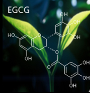 what is EGCG